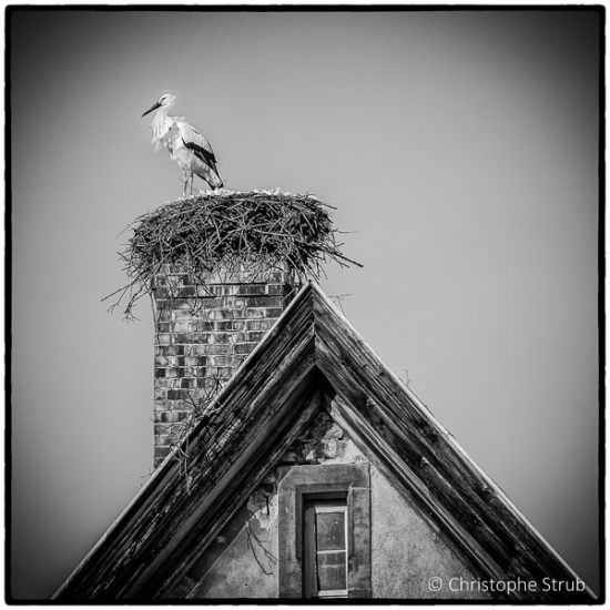 Cigogne sur cheminée.jpg