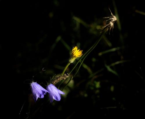 Sombre.jpg