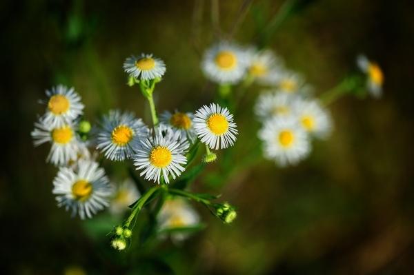 Petites fleurs.jpg